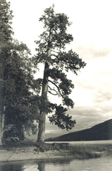 large tree on lake
